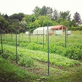 Ontario agriculture minister to visit community garden at Laurier's Northdale campus