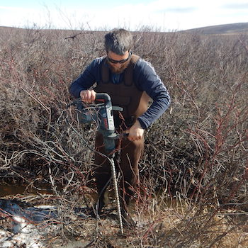 Laurier research finds increasing shrub growth on the tundra may cause permafrost to thaw faster
